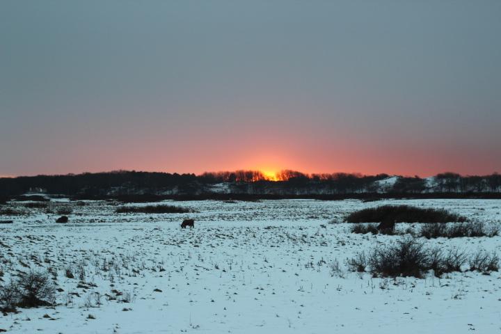 ondergaande zon boven sneeuwlandschap