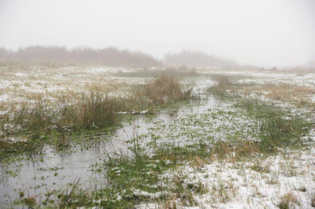 grasland met sneeuw en ijs
