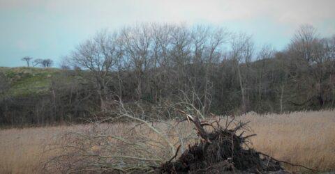 ontgraven grond met wilg
