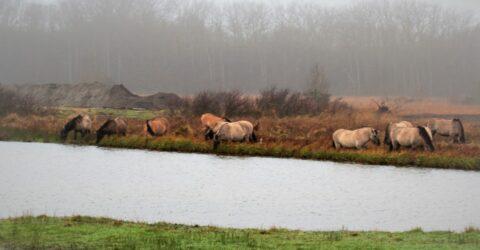 afgegraven grond met paarden op de voorgrond