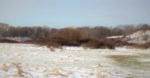 sneeuwlandschap met bonte kraai